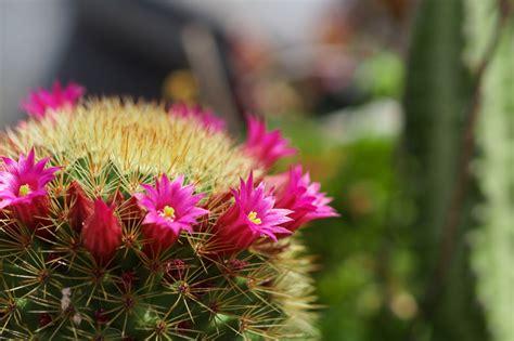 Bienfaits Du Cactus Dans Une Maison by Le Cactus Une Plante Surprenante Aux Nombreuses Vertus