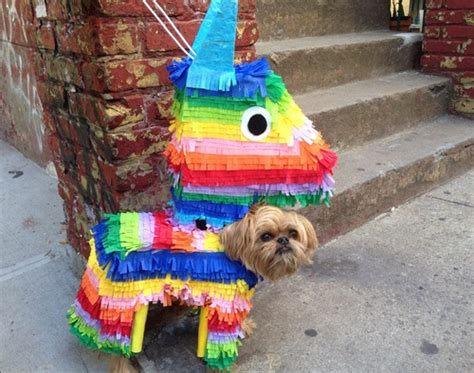 most awesome homemade pinata costume ever pinata archives really awesome costumes