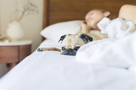 dogs sleeping in bedroom 7 benefits of sharing your bedroom with your dog new