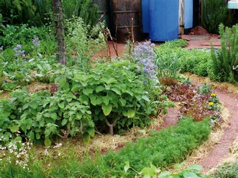 flowers for vegetable gardens combining vegetables and flowers in your garden diy