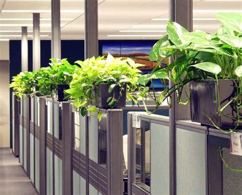 plants for the office desktop plants plantforce office plants london