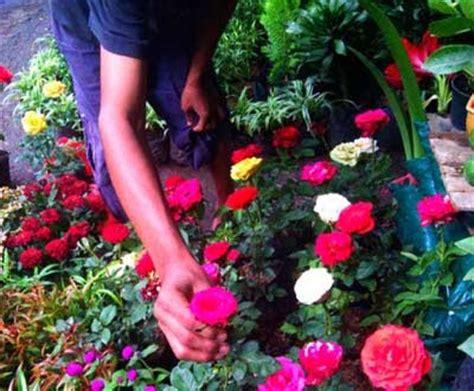 Alat Semprot Tanaman Terbaik wisata unik ke pasar bunga jalan kayoon surabaya tempat