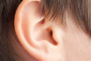 scientists grow human ear in lab from animal tissue redorbit