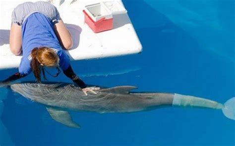 imagenes reales de winter el delfin winter el delf 237 n que ha recuperado su vida gracias a una