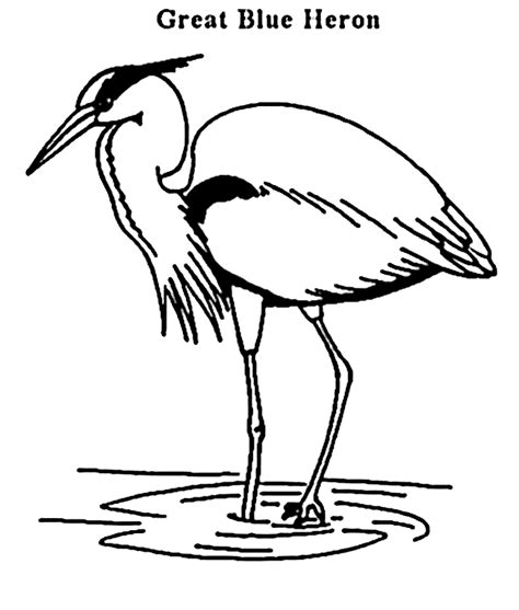 great blue heron coloring free animal coloring pages