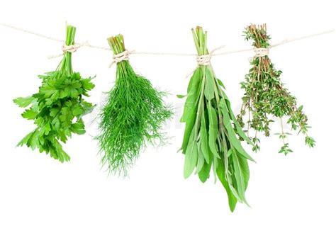 hanging bunches of fresh spicy herbs isolated on white fresh herbs hanging isolated on white background stock