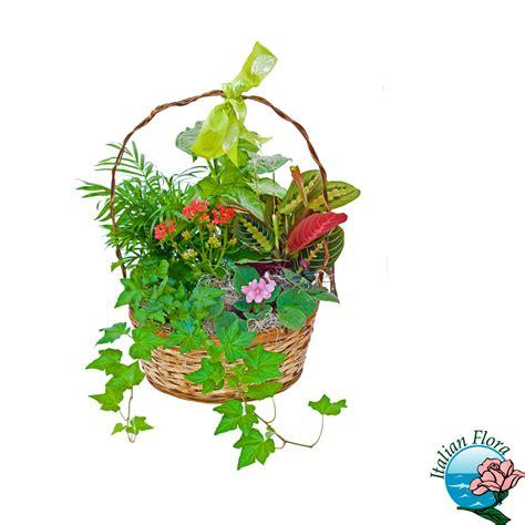 vendita fiori ciotola di piante