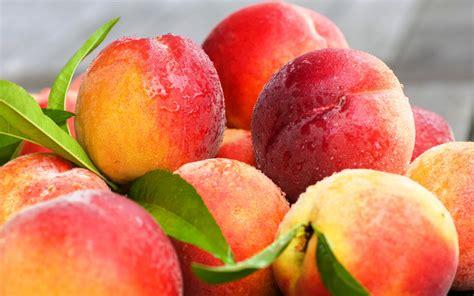 fruit x fresh fruit wallpapers 2560x1600 1118038