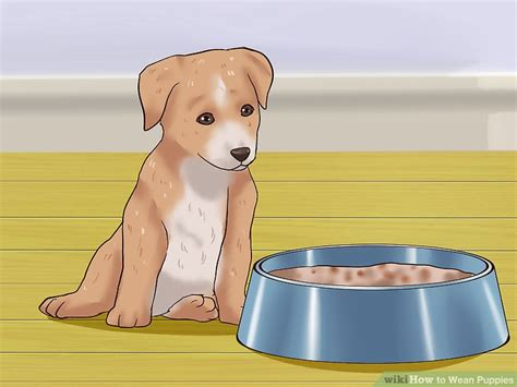 when do puppies wean how to wean puppies 10 steps with pictures wikihow