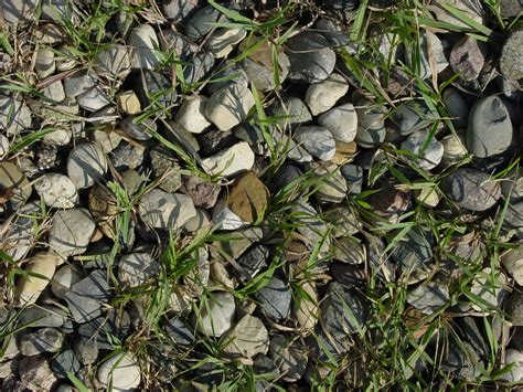 pattern nature ground free images nature grass rock ground lawn texture