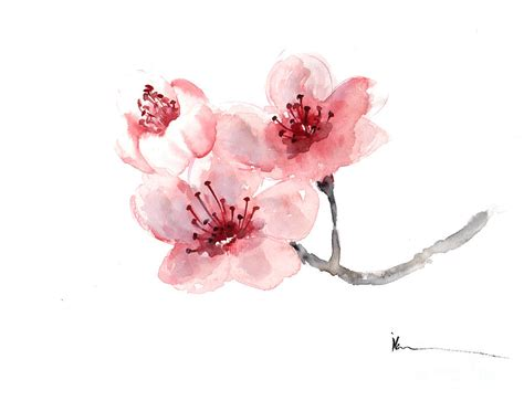 watercolor cherry blossom tattoo watercolor cherry blossom flower search