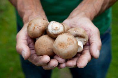 Pilze Im Garten Hund by Pilze Im Eigenen Garten 187 Erhalten Beseitigen Oder Z 252 Chten