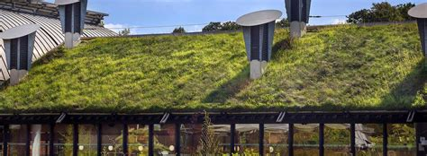green roofs bringing nature to your doorstep trinity team leads 12m eu funded project to bring nature