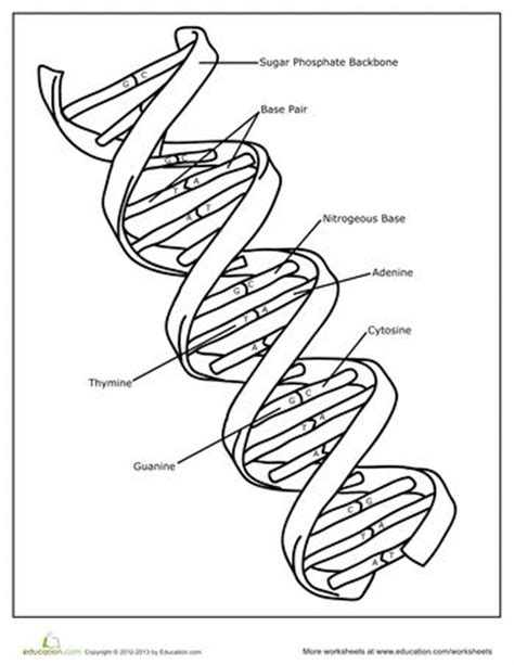dna coloring page coloring middle school science and