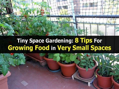 garden tips tiny space gardening 8 tips for growing food in