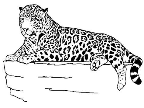 imagenes de jaguar para descargar mas de treinta im 225 genes para descargar de animales para
