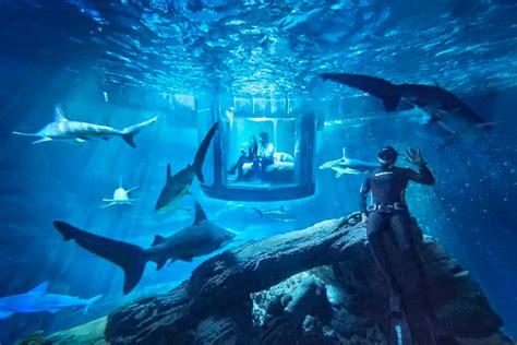 shark room airbnb shark room the awesomer