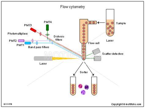 flow cytometry diagram pin flow ppt background free backgrounds on freepptnet