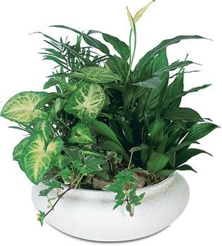 common house plants for funerals indoor plants as gifts with delivery