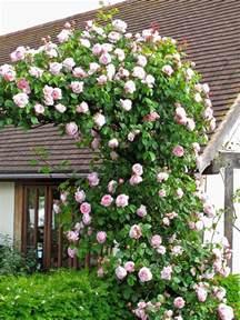 Beautiful Climbing Plants - top 3 the most beautiful climbing plants you will buoy garden