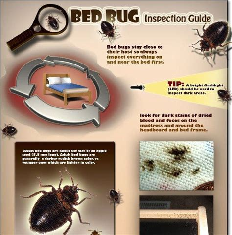 how to inspect for bed bugs 1000 images about bed bugs on pinterest