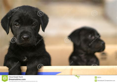 puppy in a box puppies in a box stock photos image 62013