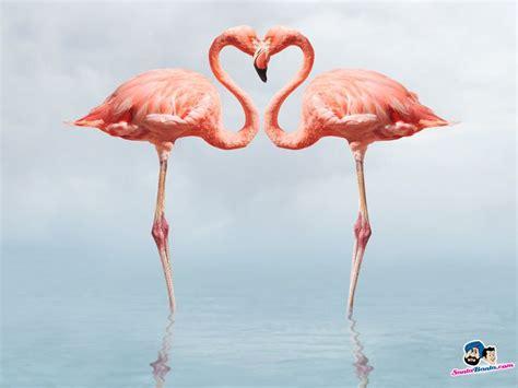 flamingo wallpaper sle flamingos birds wallpaper couples pinterest