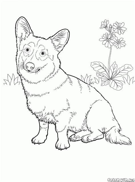 german santa coloring page dibujo para colorear pastor alem 225 n
