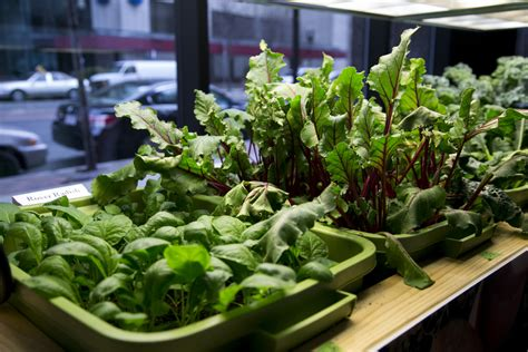12 Healthy Vegetables And Herbs To Grow Indoors The Self How To Grow An Indoor Vegetable Garden