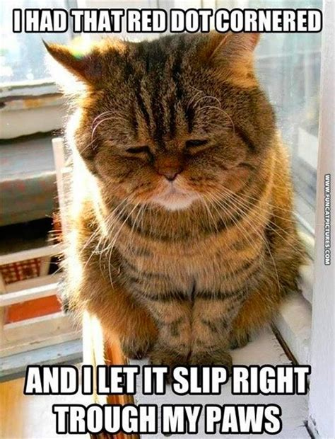 Cat Problems Meme - fun cat pictures funny cat pictures