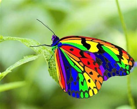 arti gambar tato kupu kupu tafsir mimpi melihat air dalam tafsir mimpi 3d bergambar