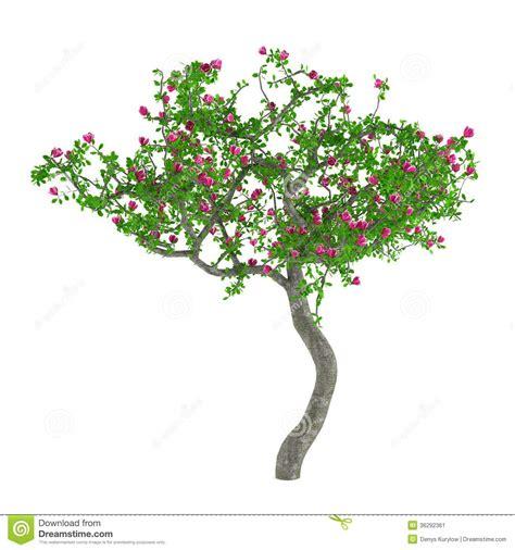 alberi con fiori rosa alberi fiore albero decorativo con i fiori rosa