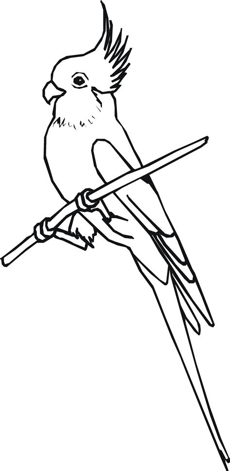 cockatiel pages coloring pages
