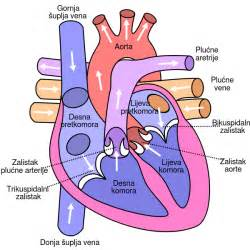 Label heart diagram worksheet label heart diagram worksheet
