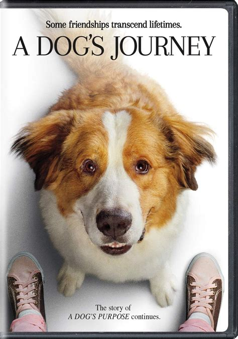 dogs journey dvd release date august