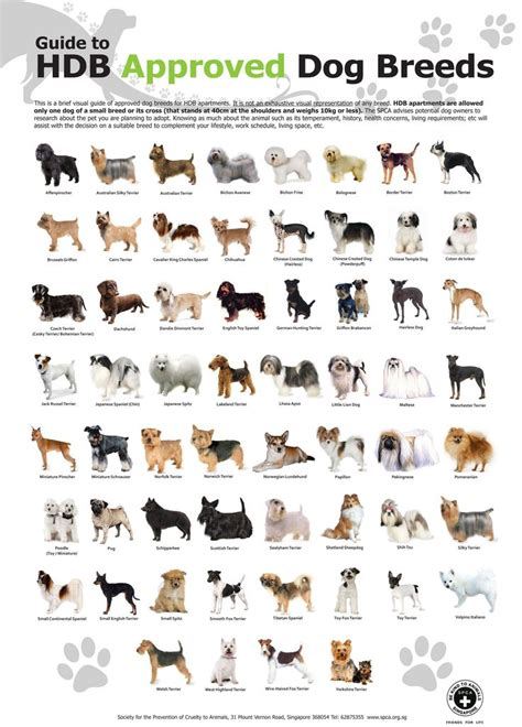 dogs and breeds 17 best ideas about breeds list on doge breed dogs of the world