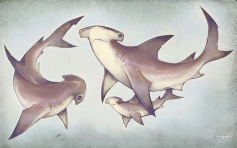 hammerhead sharks family by 6doug9 on deviantart