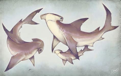 hammerhead sharks family by 6doug9 on deviantart