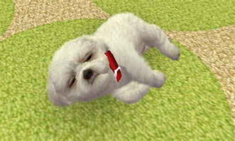 nintendogs shih tzu community by grethiwha the definitive list of the top 10 nintendo characters
