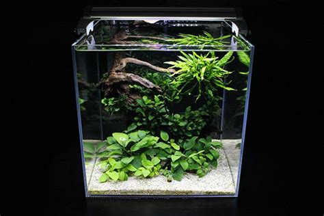 nano aquascapes nano modern aquascaping aquariums pinterest