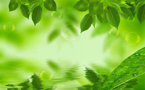 green hd wallpaper best fresh background image use lives 7771 natural green leaf hd wallpaper jpg 1680 215 1050