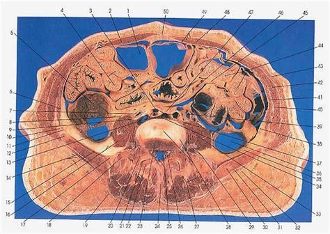 cross section of abdomen scientia cross sections of abdomen and pelvis