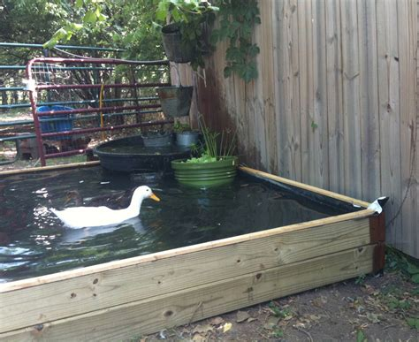 backyard duck backyard duck pond ideas 1000 ideas about duck pens on