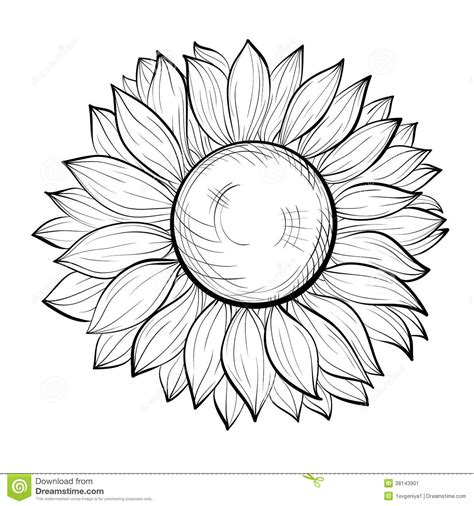 Sunflower Clip Outline by Sunflower Outline Clipart Clipart Suggest