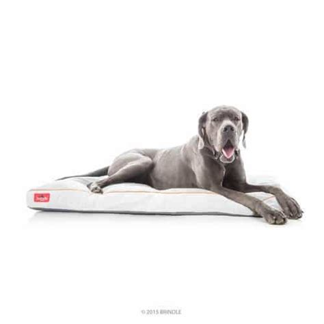 top rated dog beds 25 best rated dog beds for large dogs 2018 pet life today