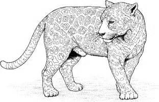 What Color Is A Jaguar Cat Big Cat Coloring Pages