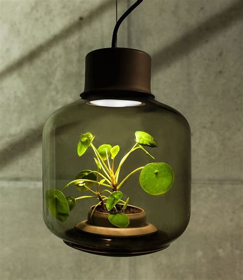 houseplants that don t need sunlight 100 houseplants that don t need sunlight pilea