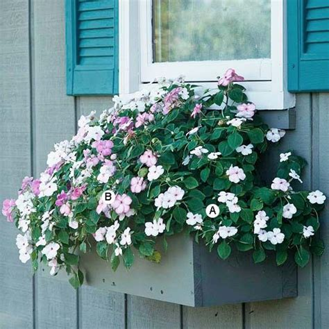 easy window box plants easy recipes for window boxes in shade