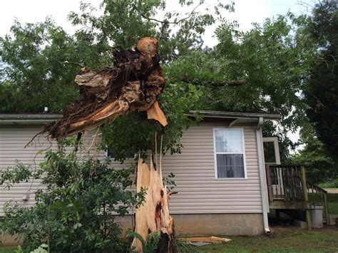 insurance trees near house strong winds blamed for towering tree falling on house wbbj tv