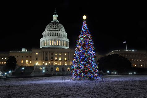 dc christmas trees weekly wins dec 6th dec 12th dc fray